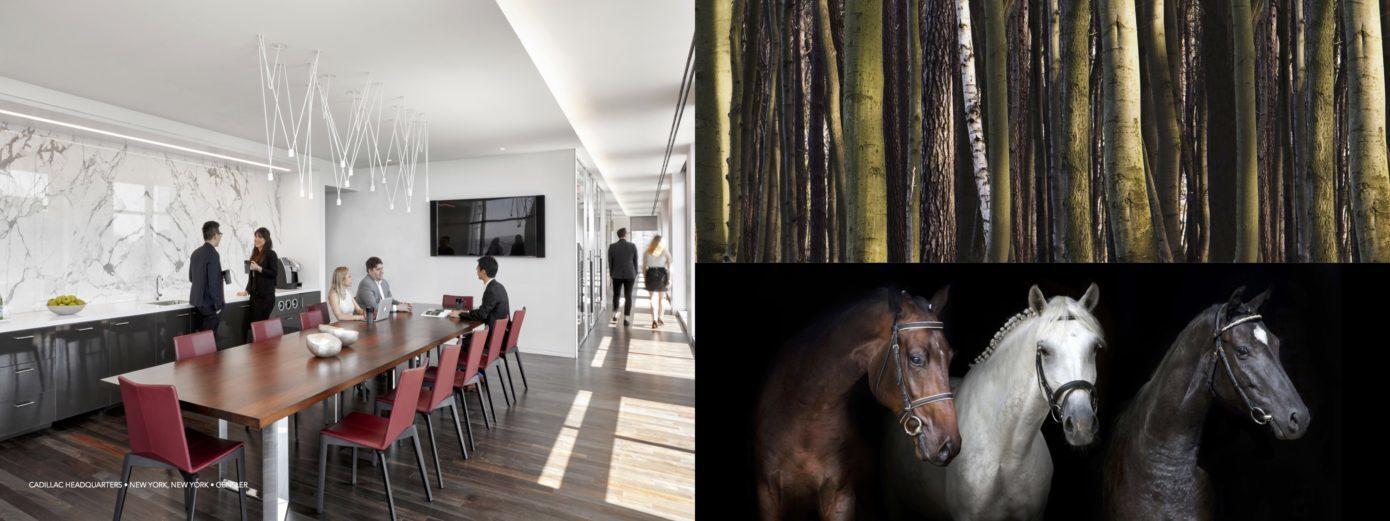 Inspiration Forest 3 Horses